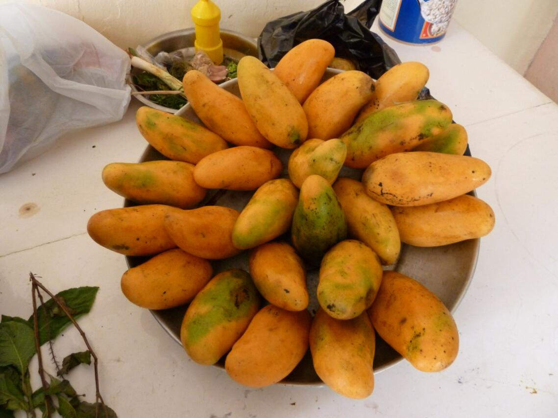 Haiti Mangoes